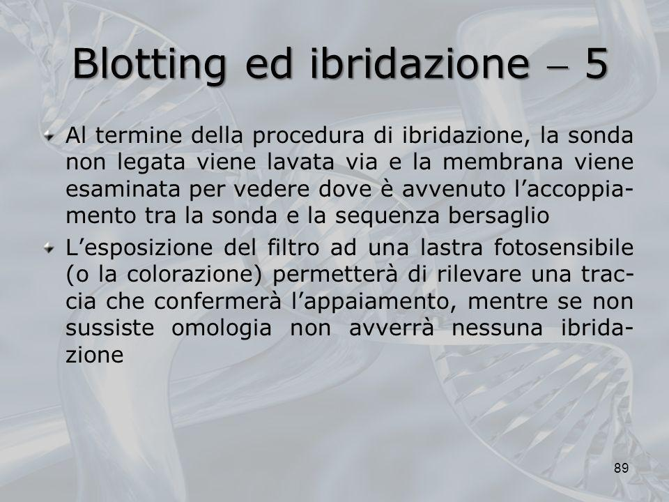 Blotting ed ibridazione  5