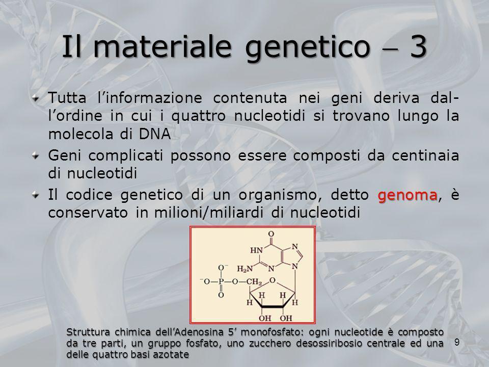 Il materiale genetico  3