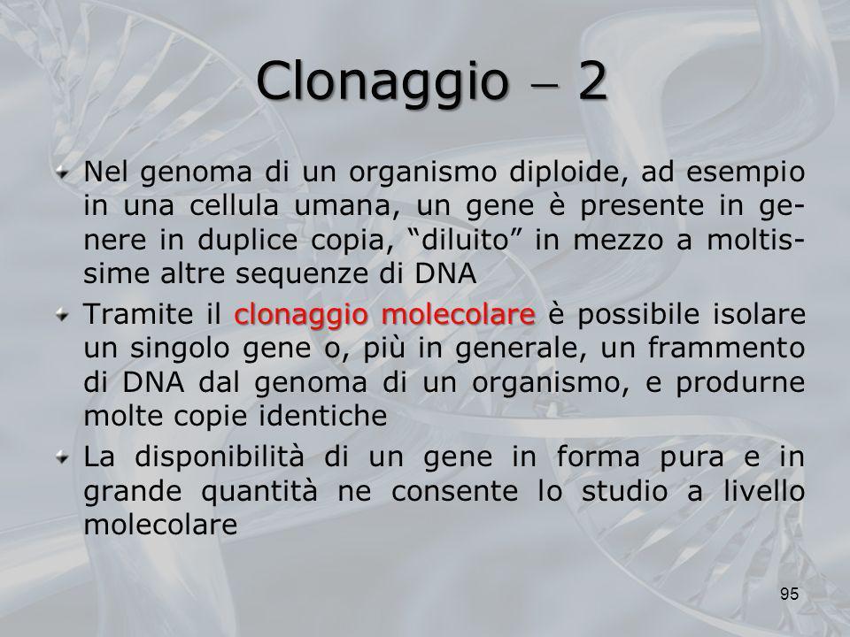 Clonaggio  2