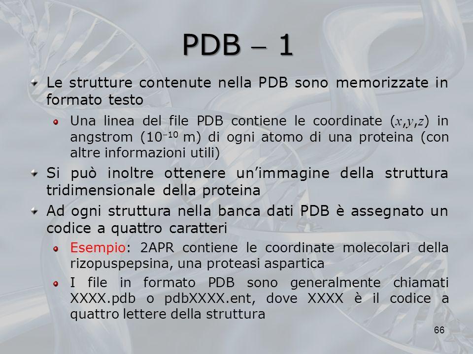 PDB  1 Le strutture contenute nella PDB sono memorizzate in formato testo.