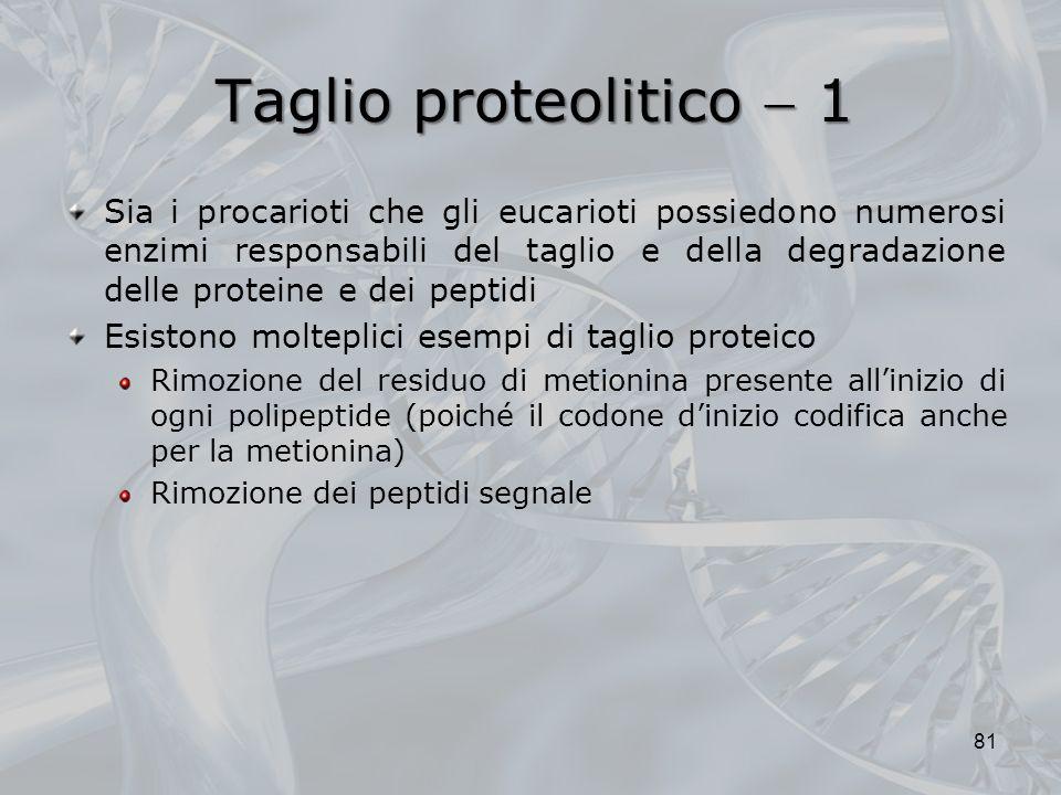 Taglio proteolitico  1