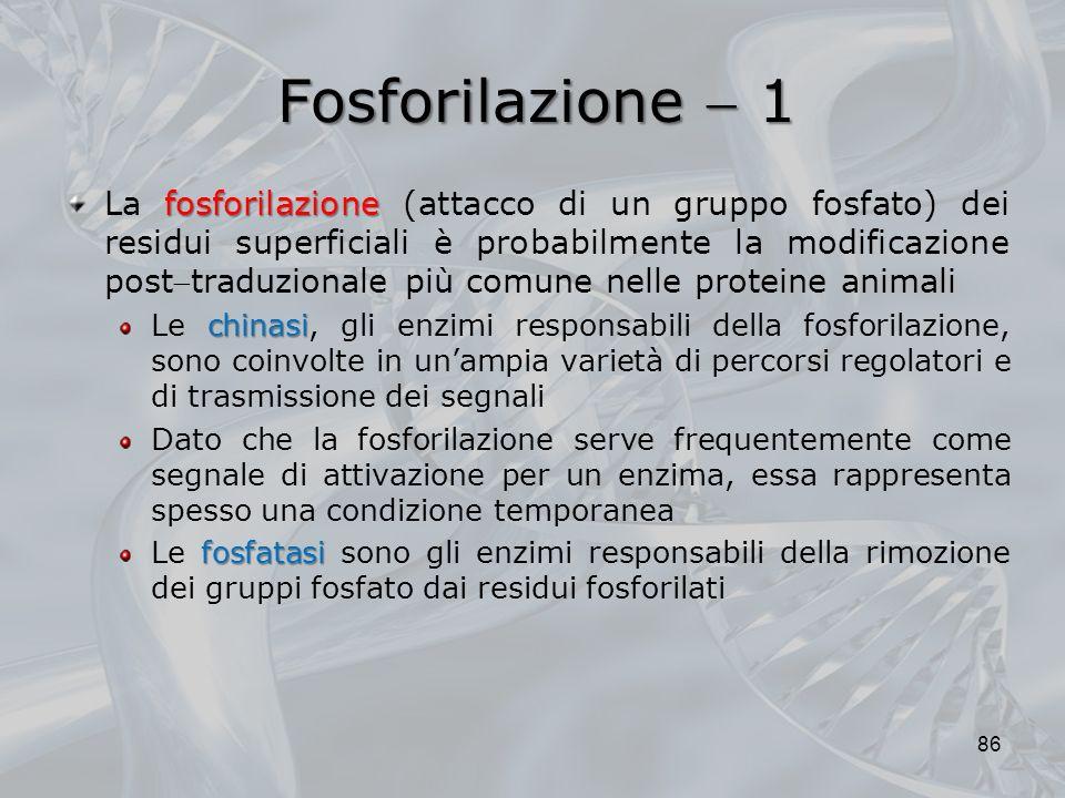 Fosforilazione  1