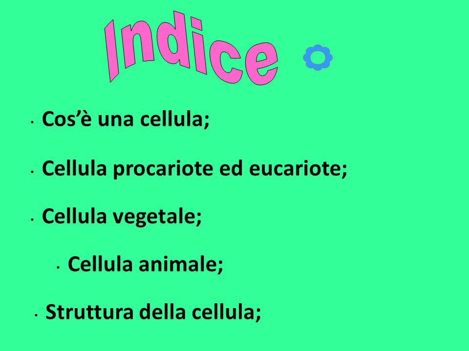 Cellula procariote ed eucariote;