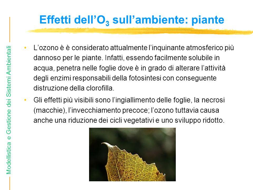 Effetti dell'O3 sull'ambiente: piante