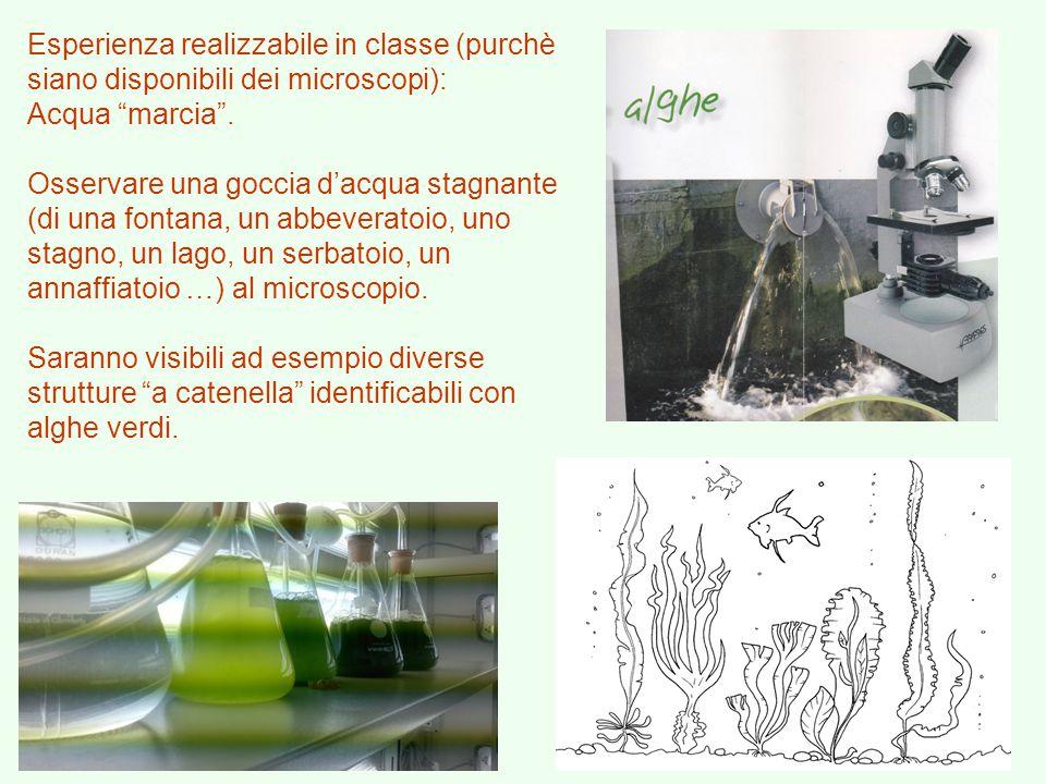Esperienza realizzabile in classe (purchè siano disponibili dei microscopi):