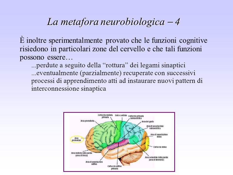 La metafora neurobiologica  4