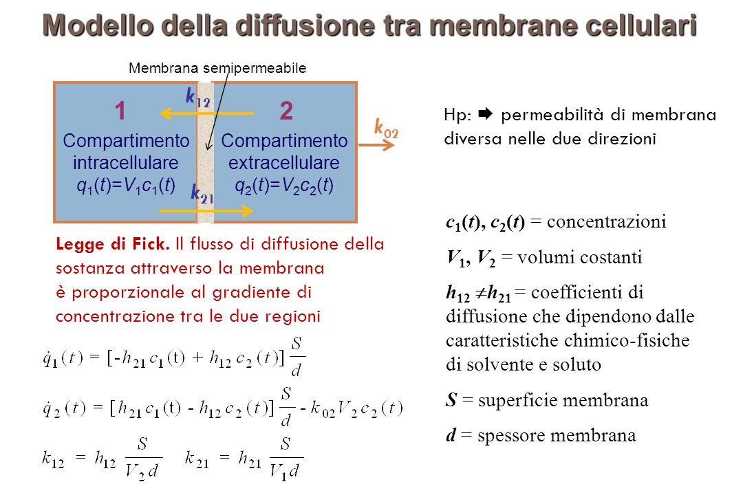 Modello della diffusione tra membrane cellulari