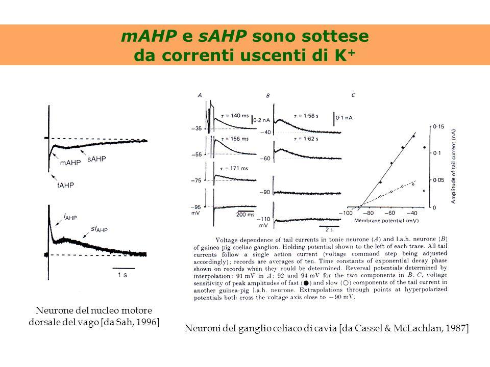 mAHP e sAHP sono sottese da correnti uscenti di K+