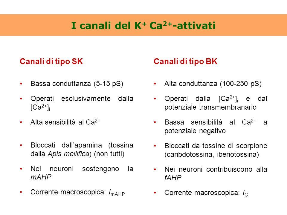 I canali del K+ Ca2+-attivati