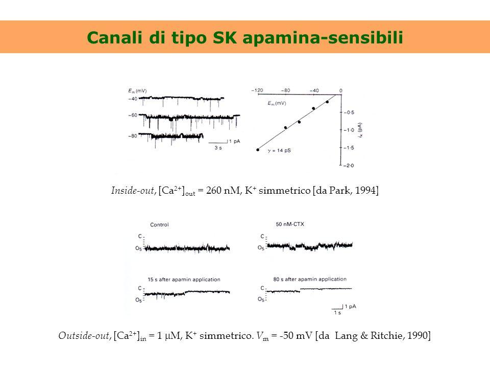 Canali di tipo SK apamina-sensibili