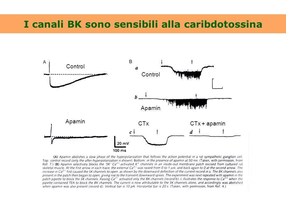 I canali BK sono sensibili alla caribdotossina