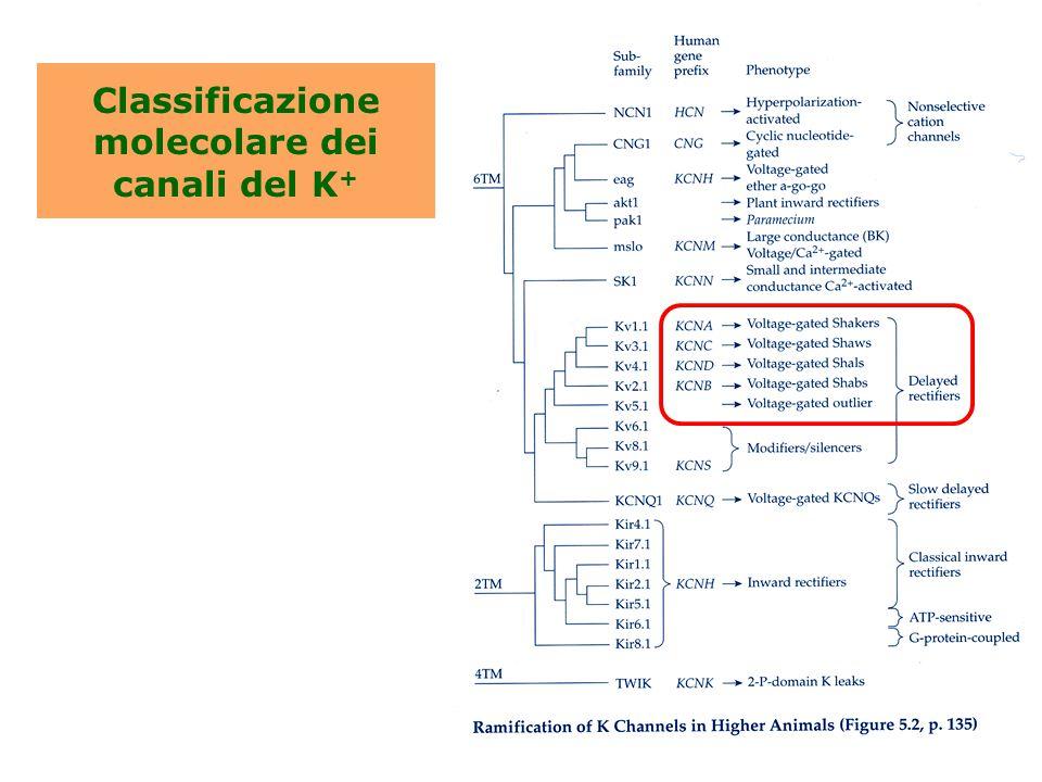 Classificazione molecolare dei canali del K+