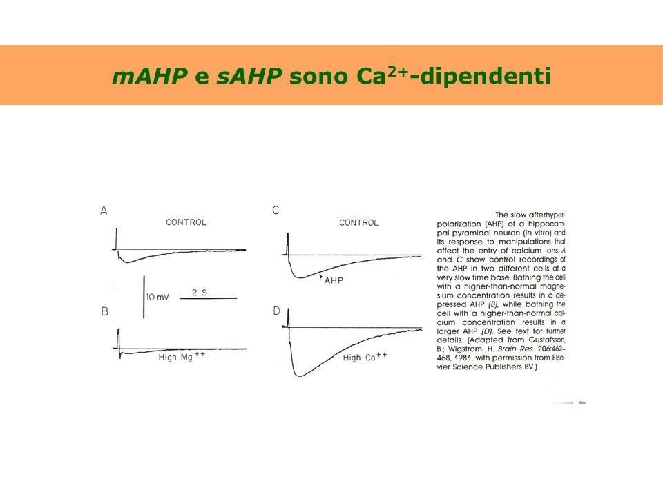 mAHP e sAHP sono Ca2+-dipendenti
