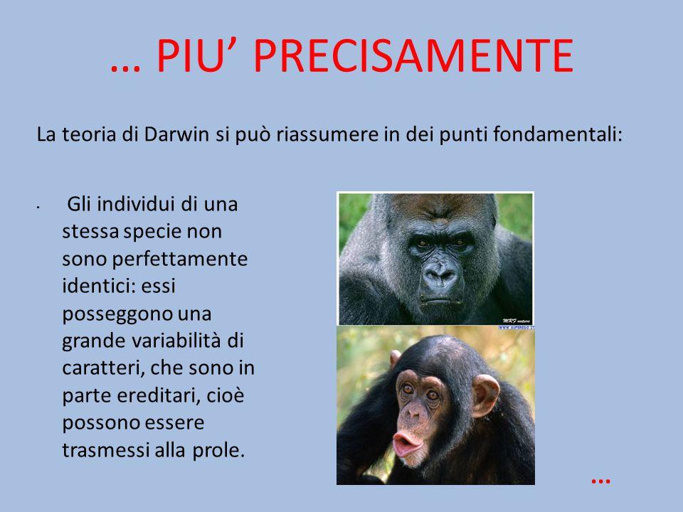 … PIU' PRECISAMENTE La teoria di Darwin si può riassumere in dei punti fondamentali: