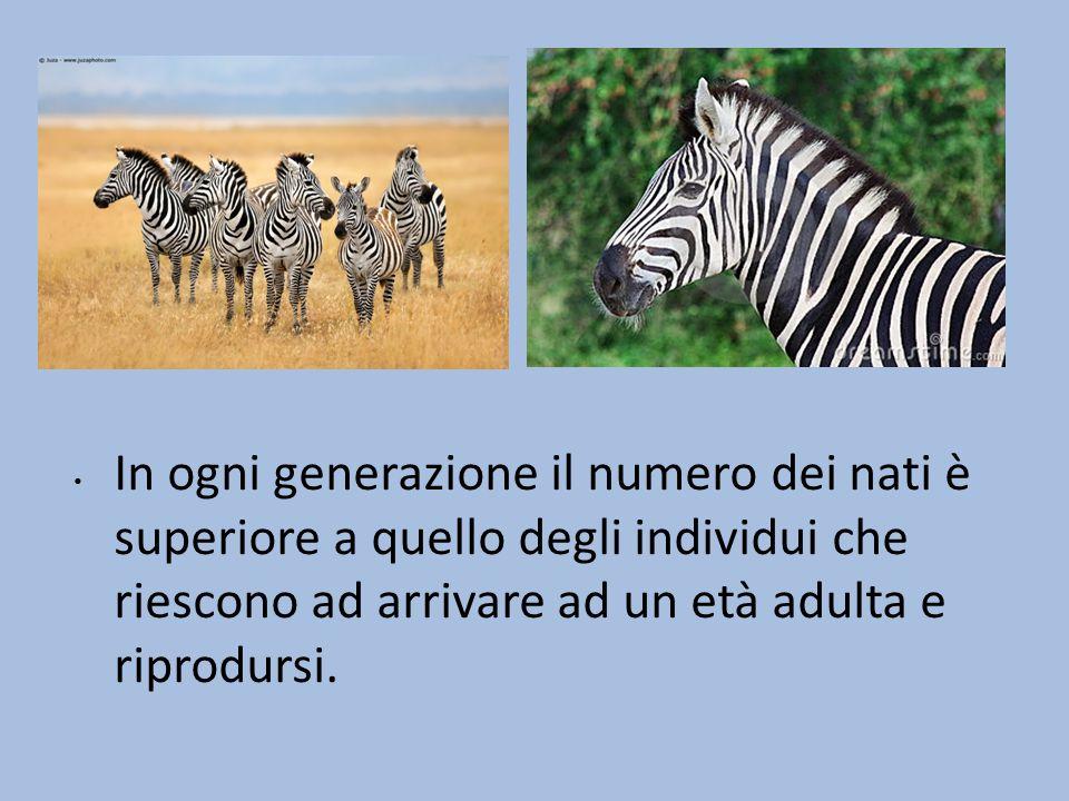 In ogni generazione il numero dei nati è superiore a quello degli individui che riescono ad arrivare ad un età adulta e riprodursi.