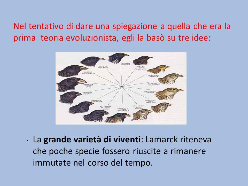 Nel tentativo di dare una spiegazione a quella che era la prima teoria evoluzionista, egli la basò su tre idee: