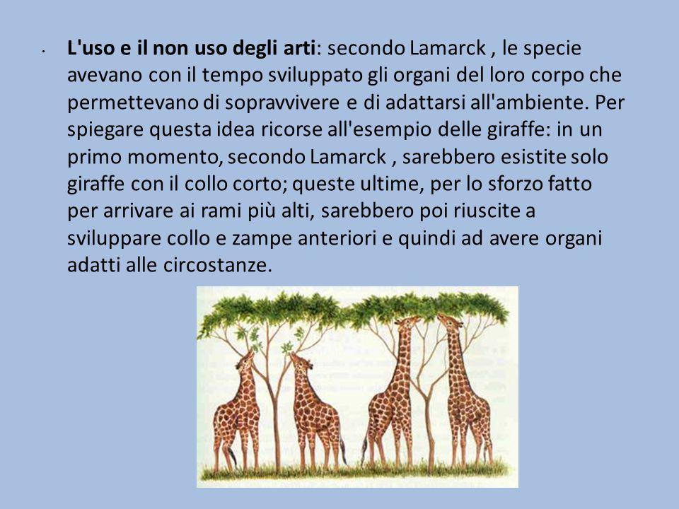 L uso e il non uso degli arti: secondo Lamarck , le specie avevano con il tempo sviluppato gli organi del loro corpo che permettevano di sopravvivere e di adattarsi all ambiente.