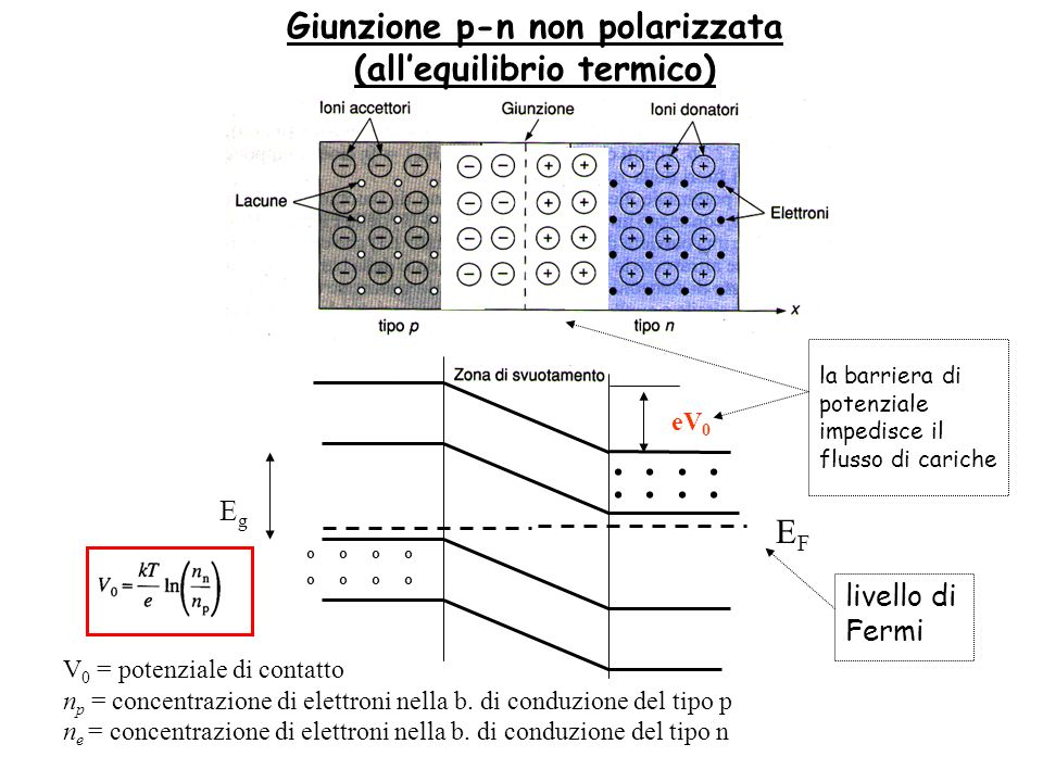 Giunzione p-n non polarizzata (all'equilibrio termico)