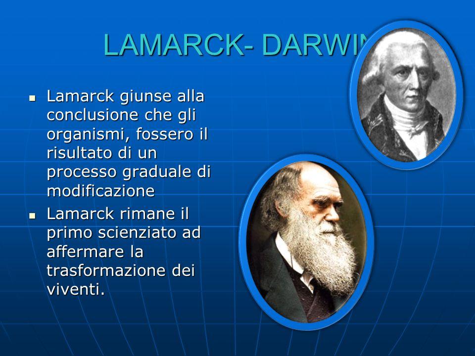 LAMARCK- DARWIN Lamarck giunse alla conclusione che gli organismi, fossero il risultato di un processo graduale di modificazione.