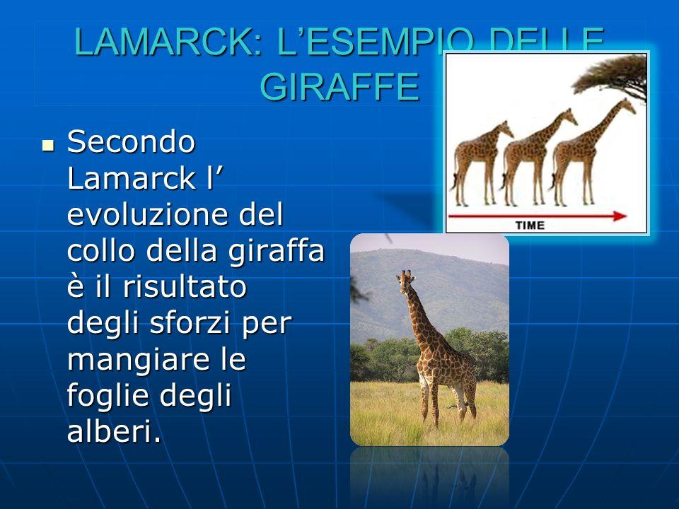 LAMARCK: L'ESEMPIO DELLE GIRAFFE