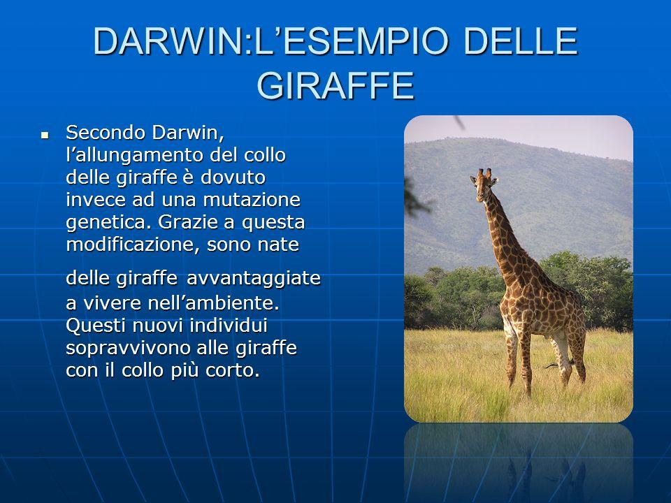 DARWIN:L'ESEMPIO DELLE GIRAFFE