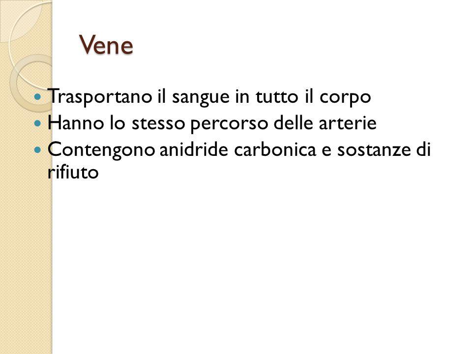 Vene Trasportano il sangue in tutto il corpo