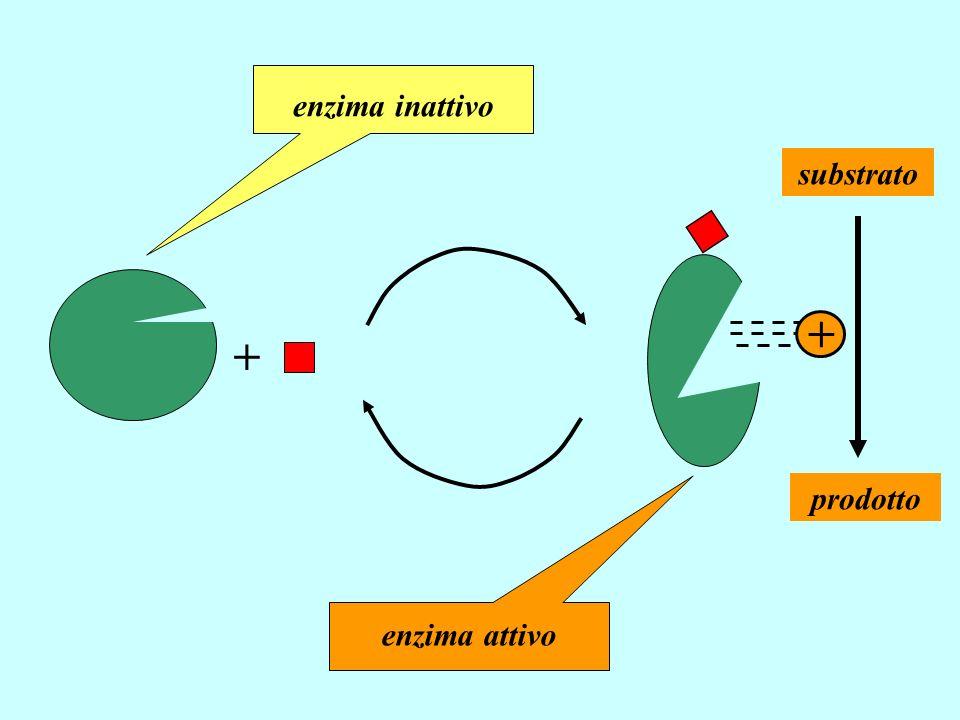 + enzima inattivo enzima attivo substrato prodotto