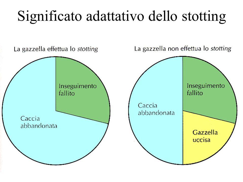 Significato adattativo dello stotting