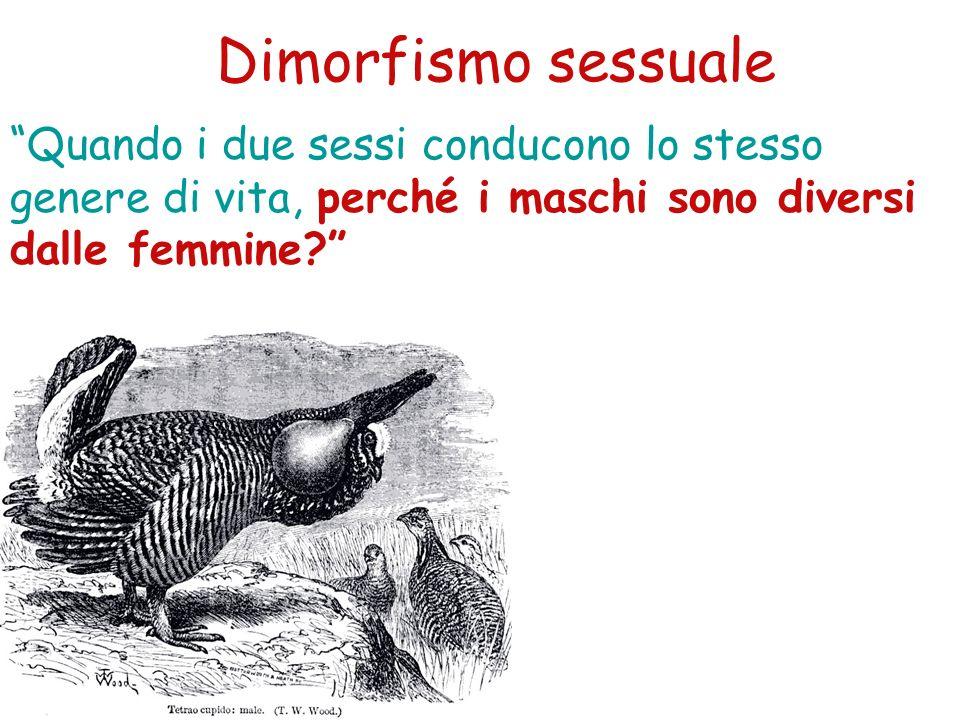 Dimorfismo sessuale Quando i due sessi conducono lo stesso genere di vita, perché i maschi sono diversi dalle femmine