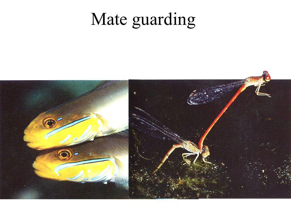 Mate guarding