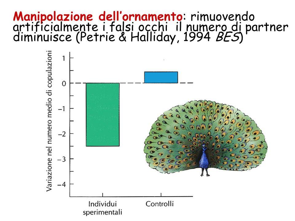 Manipolazione dell'ornamento: rimuovendo artificialmente i falsi occhi il numero di partner diminuisce (Petrie & Halliday, 1994 BES)