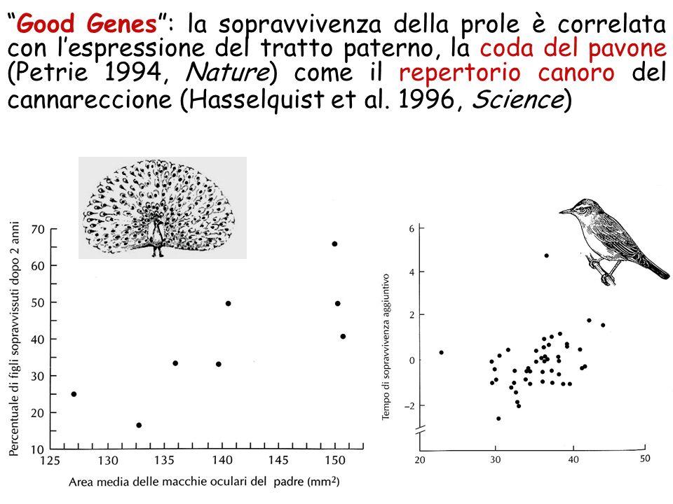 Good Genes : la sopravvivenza della prole è correlata con l'espressione del tratto paterno, la coda del pavone (Petrie 1994, Nature) come il repertorio canoro del cannareccione (Hasselquist et al.
