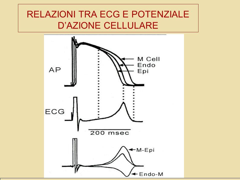 RELAZIONI TRA ECG E POTENZIALE D'AZIONE CELLULARE