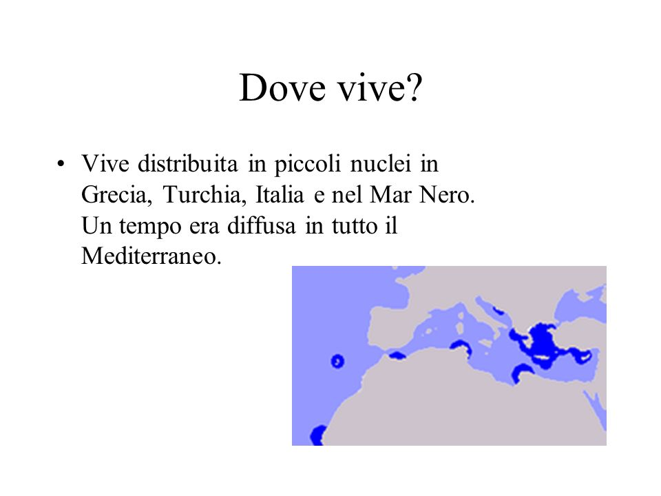 Dove vive. Vive distribuita in piccoli nuclei in Grecia, Turchia, Italia e nel Mar Nero.