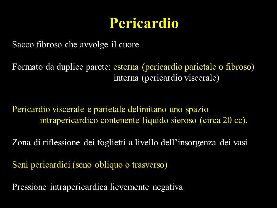 Pericardio Sacco fibroso che avvolge il cuore. Formato da duplice parete: esterna (pericardio parietale o fibroso)