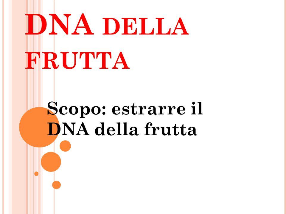 Scopo: estrarre il DNA della frutta