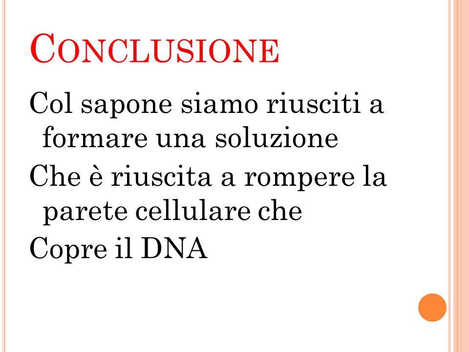 Conclusione Col sapone siamo riusciti a formare una soluzione Che è riuscita a rompere la parete cellulare che Copre il DNA