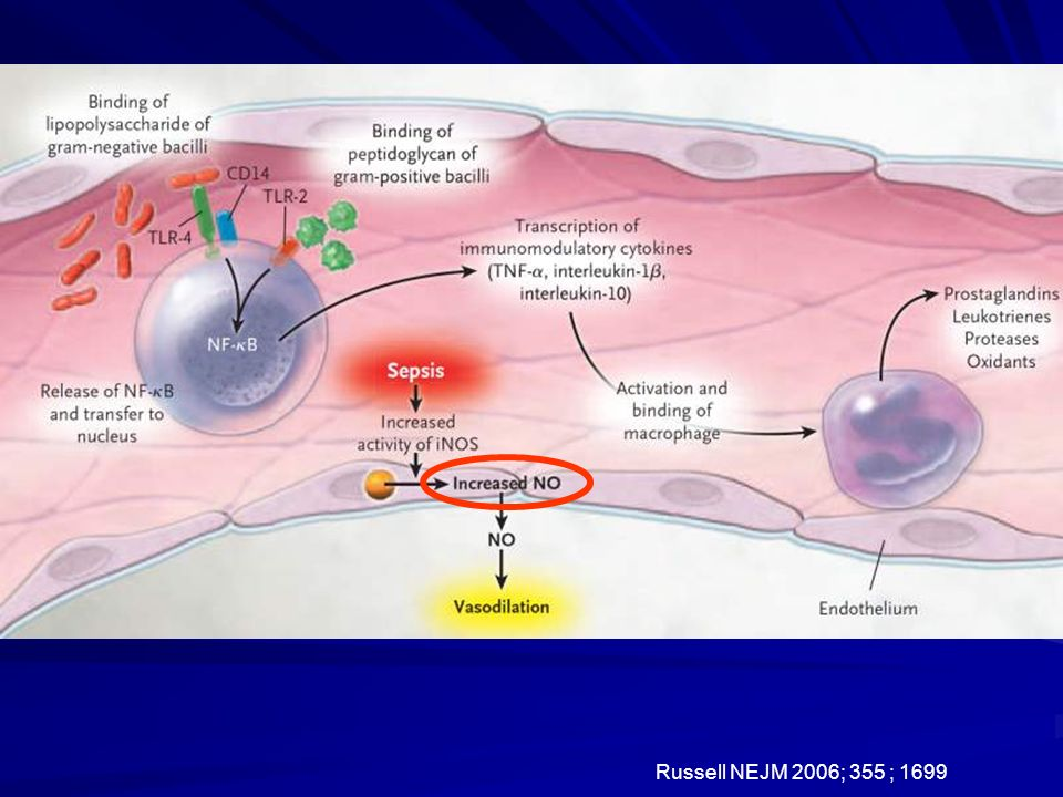Sepsis initiates a brisk inflammatory response that directly and indirectly causes widespread tissue injury. Shown