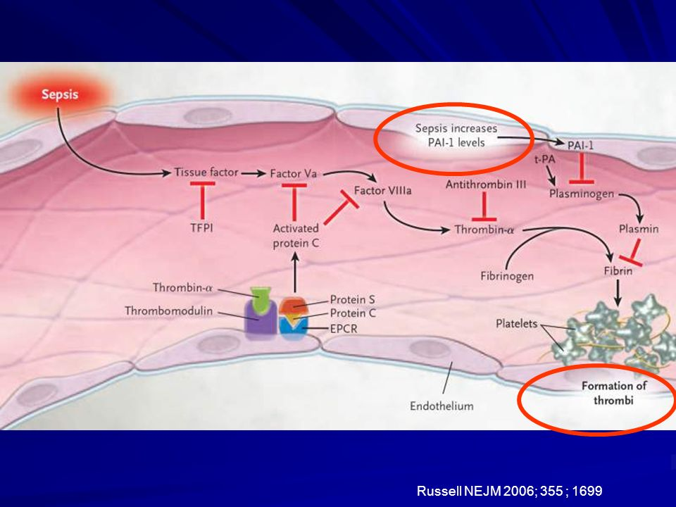 Sepsis initiates coagulation by activating endothelium to increase the expression of tissue factor. Activation of the