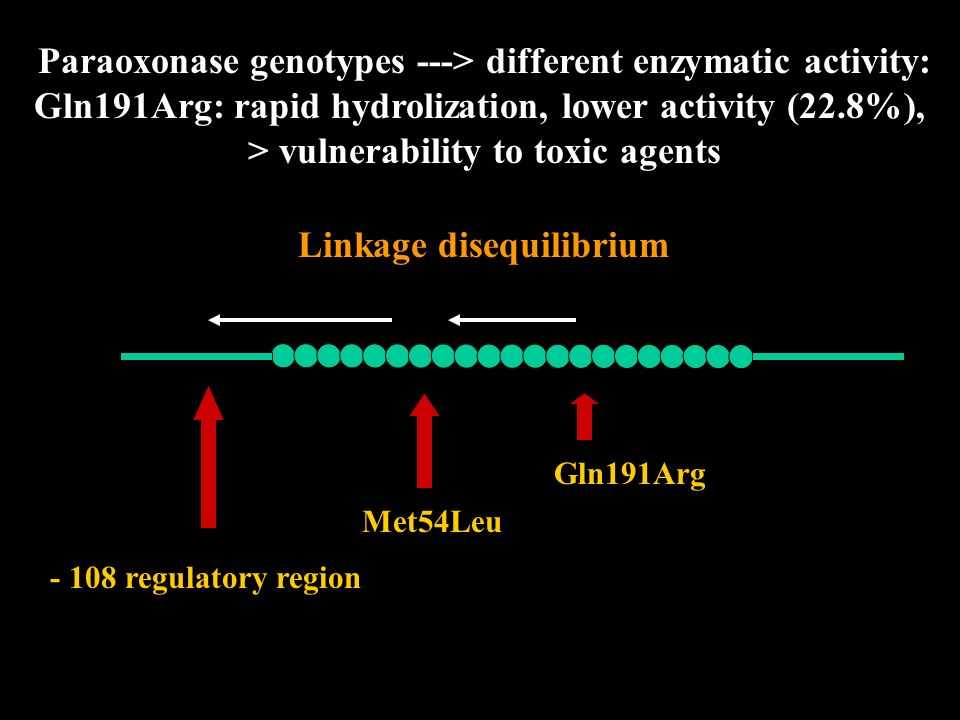 Paraoxonase genotypes ---> different enzymatic activity: