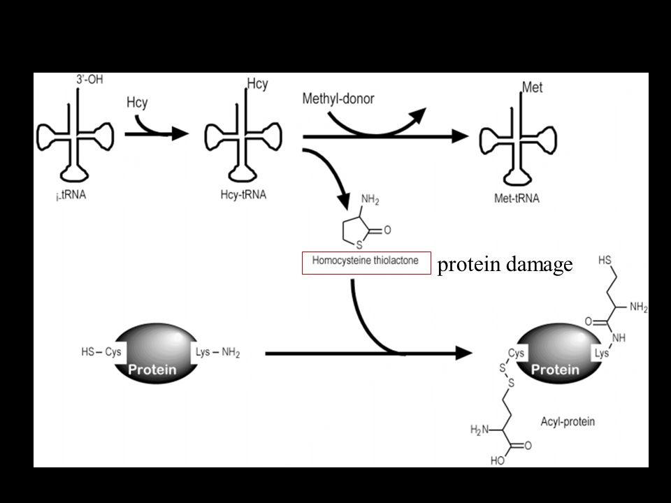 protein damage