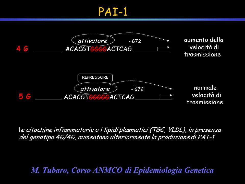 PAI-1 M. Tubaro, Corso ANMCO di Epidemiologia Genetica 4 G 5 G