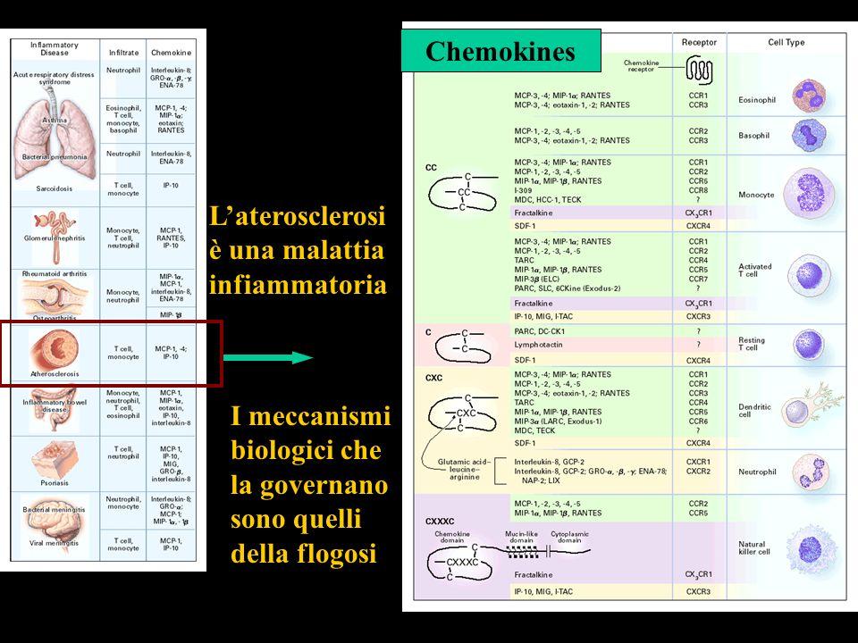 L'aterosclerosi è una malattia. infiammatoria. Chemokines. I meccanismi. biologici che. la governano.