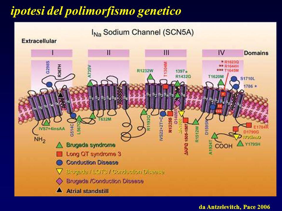 ipotesi del polimorfismo genetico