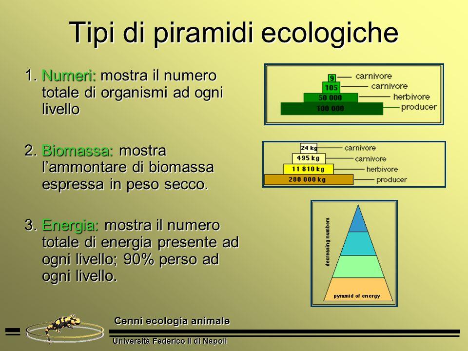 Tipi di piramidi ecologiche