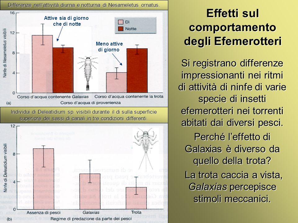 Effetti sul comportamento degli Efemerotteri