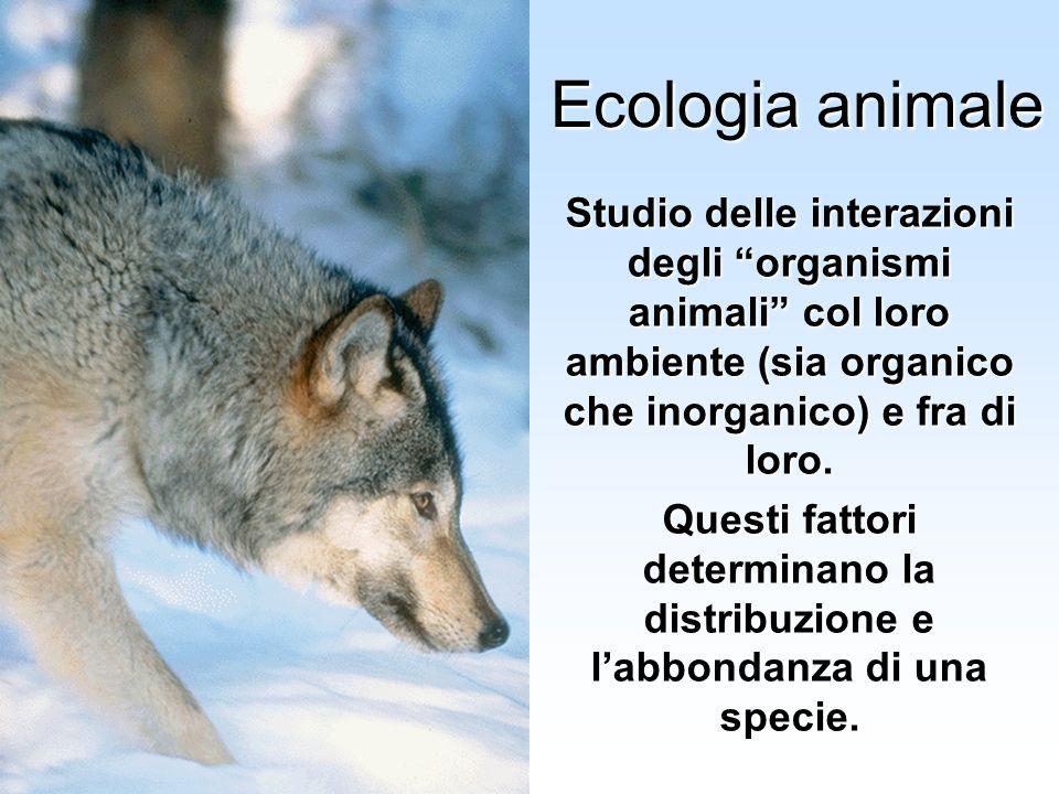 Ecologia animale Studio delle interazioni degli organismi animali col loro ambiente (sia organico che inorganico) e fra di loro.
