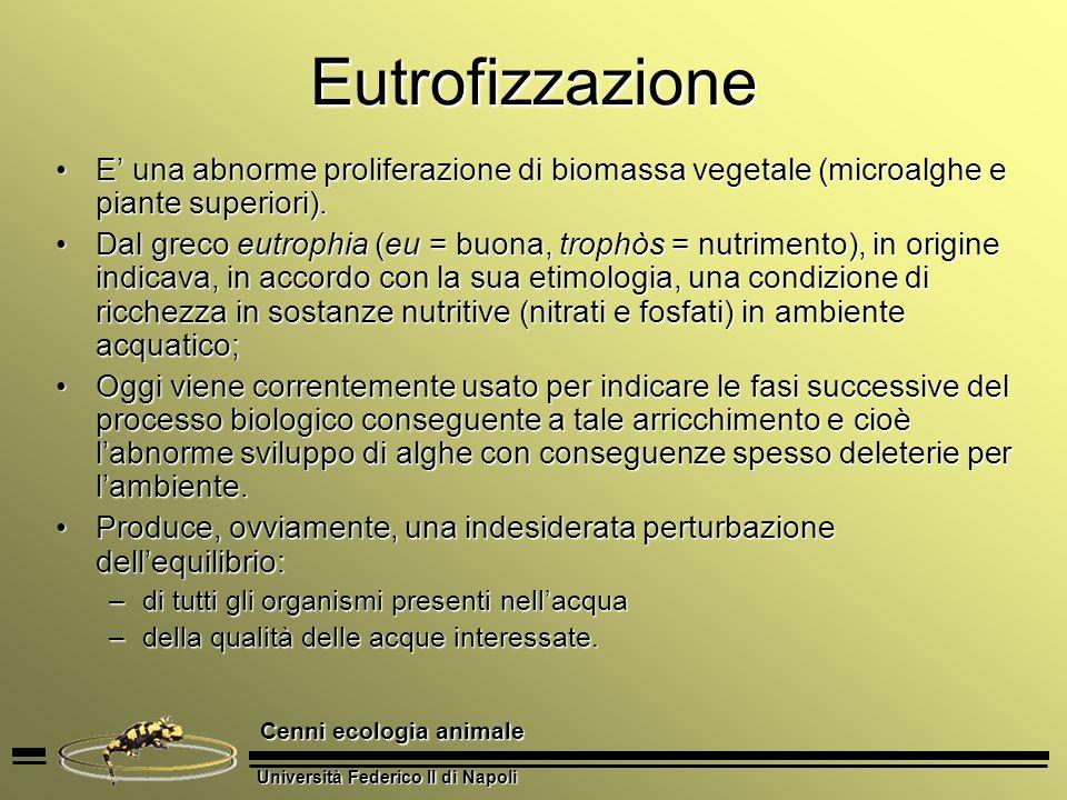 Eutrofizzazione E' una abnorme proliferazione di biomassa vegetale (microalghe e piante superiori).