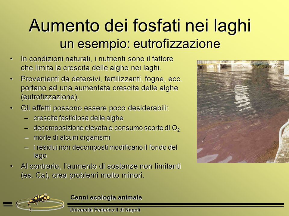 Aumento dei fosfati nei laghi un esempio: eutrofizzazione
