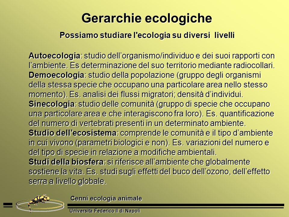 Possiamo studiare l ecologia su diversi livelli